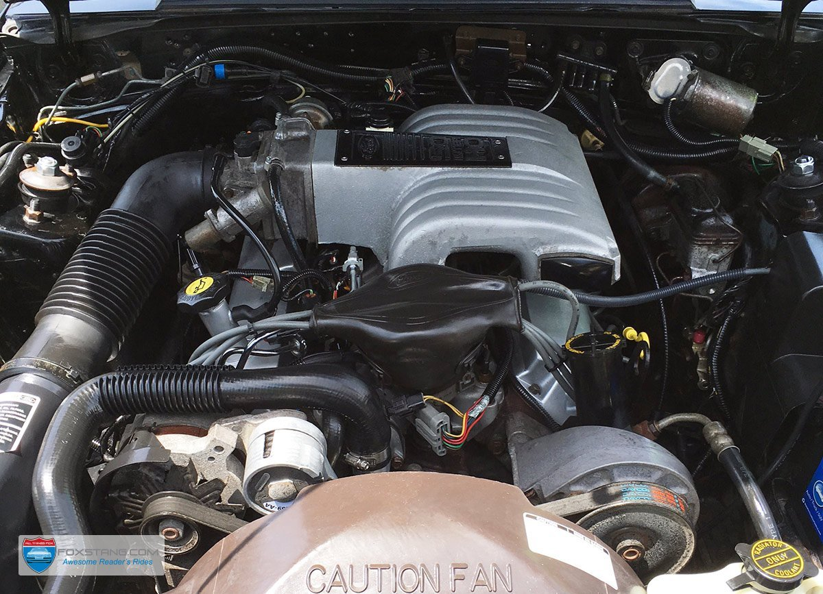 Fox Mustang Engine Bay Restoration Guide 92 Body Wiring Harness Heres An Image Gallery Of Real Clean Bays From 86 To 93 These Will Be Constantly Updated So Sure Come Back Or Add Yourself The Mailing