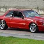 Fox notchback
